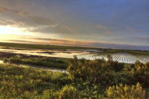 Louisiana-7336-tm-sunset