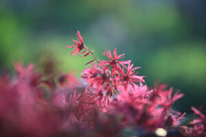 red-flowers-0552